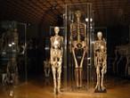 128 NS-Opfer kamen an Innsbrucker Anatomie