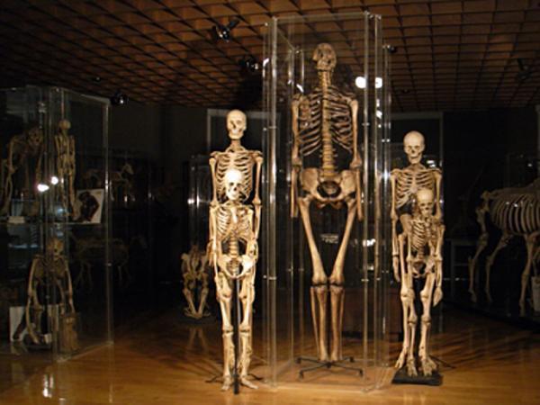 Anatomisches Museum Innsbruck (Anatomie Ibk).jpg