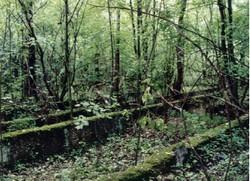 Fundamentreste vom ehemaligen Lager
