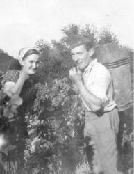 Ein belgischer Kriegsgefangener aus dem Stalag XVII B und eine österreichische Weinbäuerin bei der Arbeit im Weingarten (Sammlung Barbara Stelzl-Marx, Graz).
